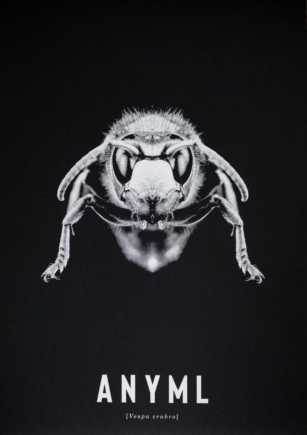 ANYML Siebdruck - Vespa crabro | Hornisse