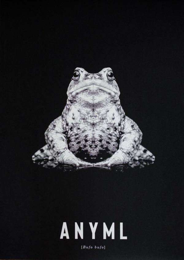 ANYML Siebdruck - Bufo bufo | Kröte